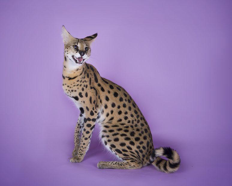 luksusowe koty i psy